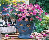 Argyranthemum frutescens (Marguerite) in blue pot with face