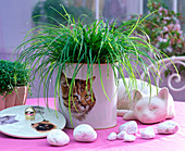 Carex montana in planter with cat motif