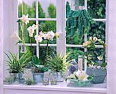 Shin Yong Metall: Chlorophytum (Grünlilien), Phalaenopsis (Malaienblume)