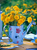 Taraxacum bouquet in light blue watering can with flowers