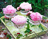 Paeonia blossoms in glass bowls, decorated with Fragaria