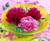 Paeonia flowers in yellow bowl floating on water