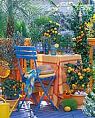 Citrus Balcony, Citrus (Calamondin Oranges), Olea (Olive), Phoenix