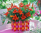 Lilium 'Red Dwarf' (lily) in a colorful wicker basket