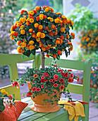 Lantana planted with Calibrachoa