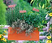 Herb-box Rosmarinus officinalis, Thymus citriodorus