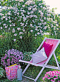 Folding seat chair in front of Rosa multiflora, Pelargonium Angeleyes