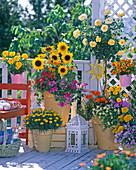 Bauerngarten balcony: Helianthus, Rosa ','