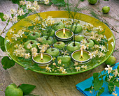 Clematis, Asparagus, small green malus