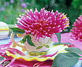 Dahlia (cactus dahlia) blossoms in painted cup, petals