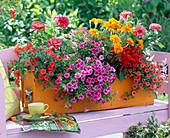 Orange wooden box with Calibrachoa Celebration Star 'Purple'