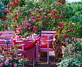 Terrace with roses 'flame dance' (climbing rose)