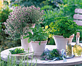 Herbs in ceramic pots