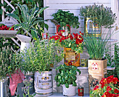 Kitchen herbs in tin cans and enamel jug