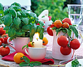 Lycopersicon (tomato), ocimum (basil) in cup and jug