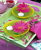 Gerbera blossoms in yellow bowl with lemna (duckweed)