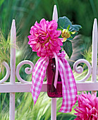 Pink Dahlia in purple glass bottle with checkered band
