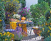 Terrace, Nepeta, Calceolaria, Passiflora