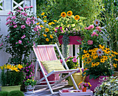 Late summer balcony with hibiscus, coneflower and sunflowers