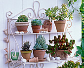 Wall shelf with succulents