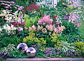 Shade bed with Astilbe (grandstand), Digitalis (thimble)