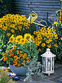 Planted bowl in front of bed with Rudbeckia 'Goldsturm'