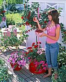Woman picking Ribes stem