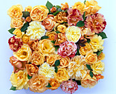 Pink (yellow, orange and flamed rose) cut out