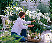 White terrace, woman cutting Agapanthus flowers
