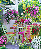 Petunias balcony