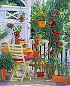Vegetable balcony with paprika and tomatoes