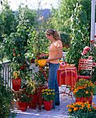 Woman harvesting lycopersicon (tomato) on snack balcony