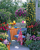 Colorful balcony with summer flowers and potted plants