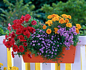 Orange wood flower box planted in blue-yellow-red