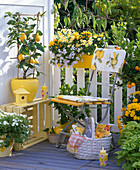 White and yellow balcony with citrus limon (lemon)
