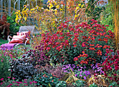 Autumn, bed, seat, perennials, woody plants