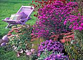 Autumn, garden, perennials, seat
