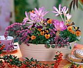 Autumn, onion flowers, berries, peel