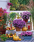 Autumn, balcony, pink, purple, pink, berries, fruits