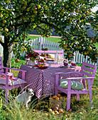 Pink sitting group under Malus (apple tree)