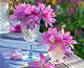 Colchicum (autumn timeless) in relief glasses, blue tablecloth