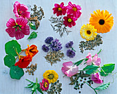 Board with summer flowers and their seeds in a clockwise direction