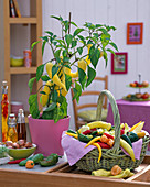 Yellow capsicum in pink pot, basket of harvested peppers