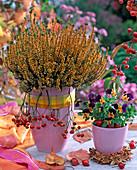 Calluna vulgaris 'Alice' (Budding Summer heather)