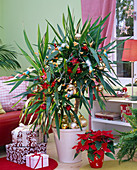 Yucca decorated with fairy lights and Christmas tree balls