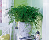 Asparagus in white braided planter on shelf, lantern