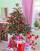 Abies nordmanniana (Nordmanntanne) als Weihnachtsbaum mit roten Kugeln