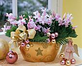 Schlumbergera (Christmas Cactus) Pink, with Christmas tree balls