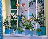 Theme window, theme orchids