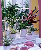 Theme window, theme colorful foliage plants